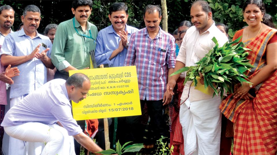 Ayurvedic-herbal-plants-cultivation-kerala